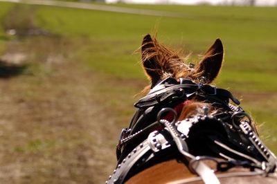 Horse 3 web