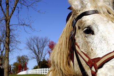 Horse 1 web