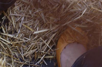 Shoe web