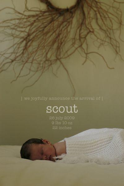 Scout1 copy 2