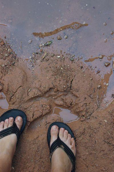 Celeste feet web